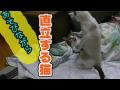 遊びながら直立する猫