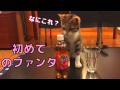 初めてファンタを見た猫が秒で見切りをつけた反応が面白かわいいw